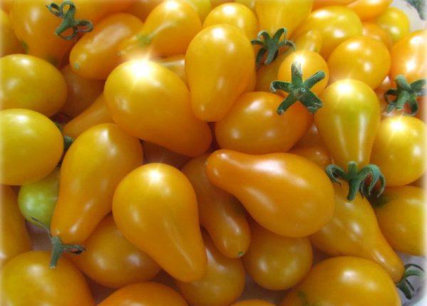 Томат Yellow Pear